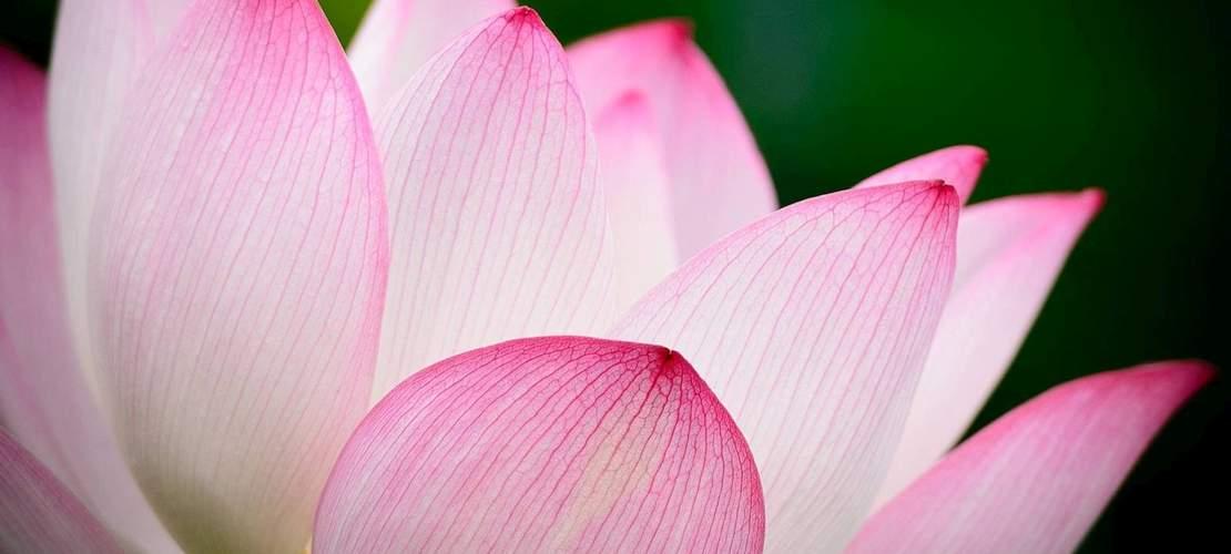 Jezelf en je geest leren kennen - Meditatie - Kennis van vrijheid - Lotus trilogie - Onderzoek - Zelf - Inzicht