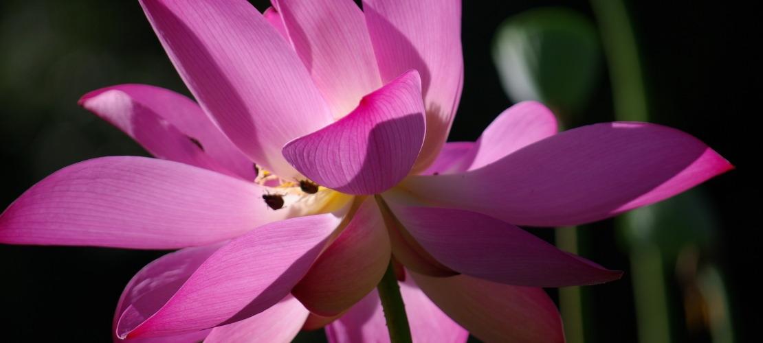 Themaworkshop Meditatie volhouden van 10 tot 13 uur op zaterdag bij Nyingma Centrum Nederland